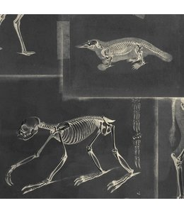 MIND THE GAP Zooarchaeology Anthracite