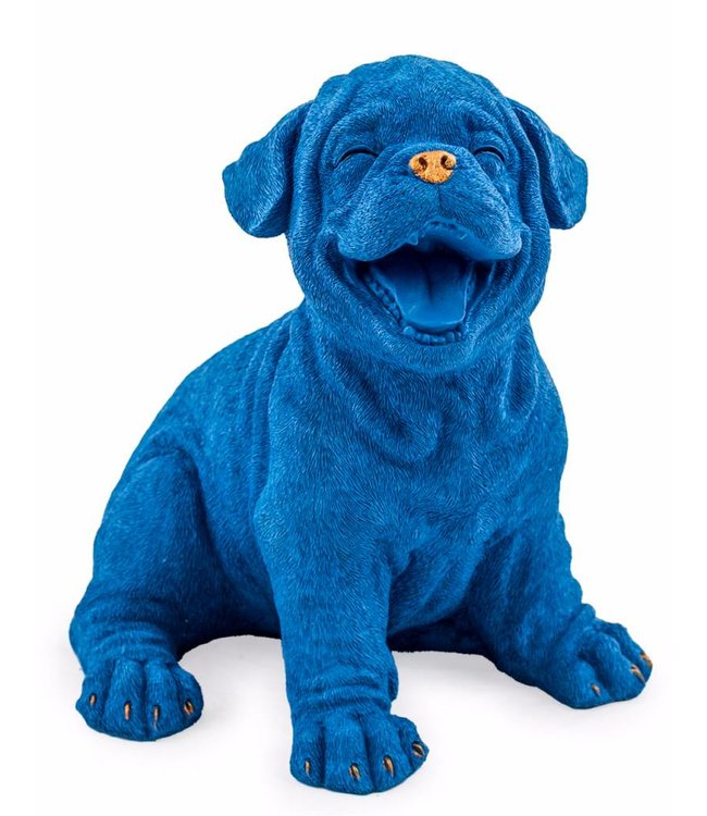 M&R Laughing Royal Blue Puppy