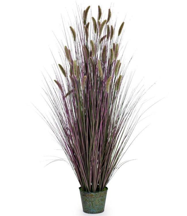 M&R Ornamental Grasses in Galvanised Pot