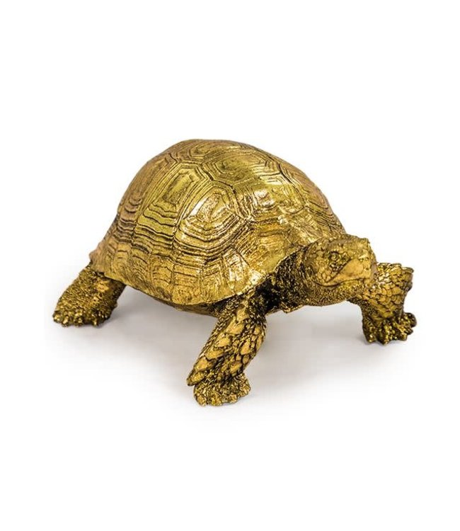 Small Gold Tortoise