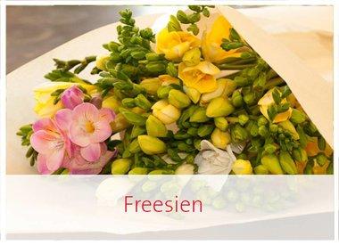 Freesien