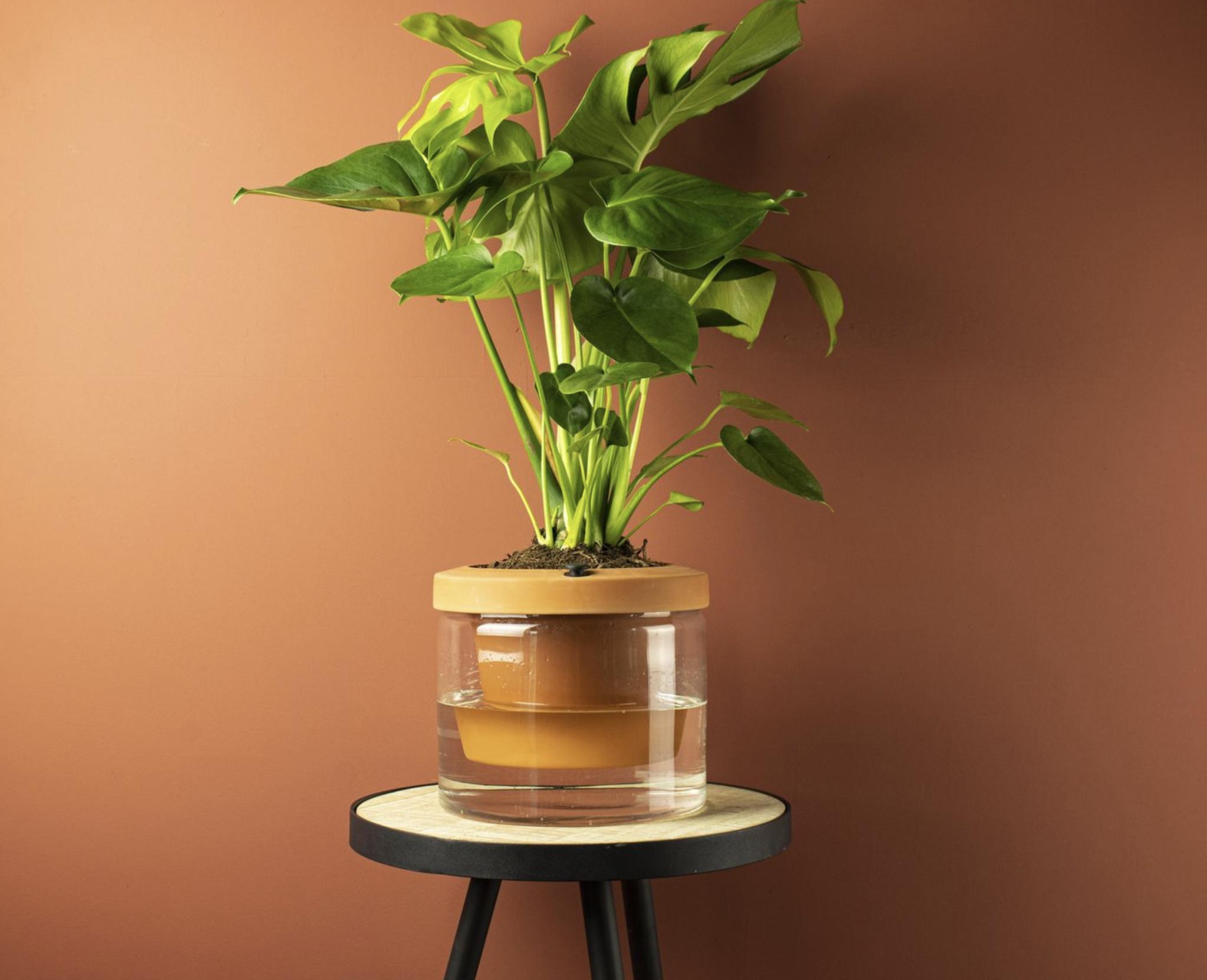 Gusta Gusta TerraCotcha Plantenpot Ø18.5cm
