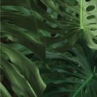 Kek Amsterdam Wallpaper Tropical Monstera Blätter grün Vlies Papier 97,4x280cm
