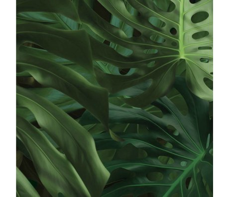 Kek Amsterdam Wallpaper Tropical Monstera leaves green non-woven paper 97.4x280cm