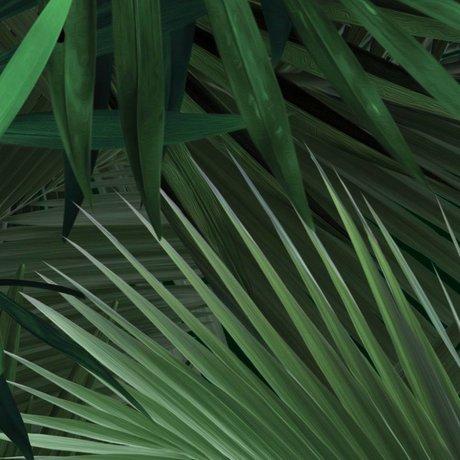 Kek Amsterdam Carta da parati foglia di palma tropicale Libro verde 97,4x280cm non tessuto