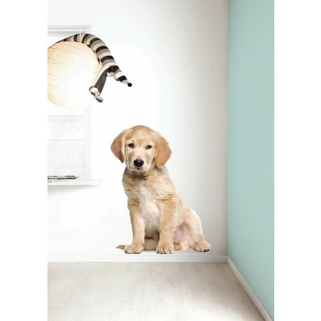 Kek Amsterdam Wall Decal XL Golden Retriever puppy, 91x117cm