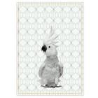 pt, Torchon Kakadu noir blanc coton 50x70cm