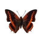 Kek Amsterdam Stickers muraux Papillon 954, brun, 17x12cm
