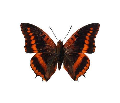 Kek Amsterdam Pegatinas de pared de la mariposa 954, marrón, 17x12cm