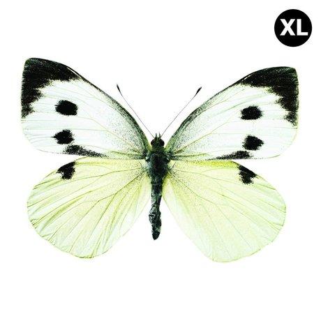 Kek Amsterdam Stickers muraux Papillon 960 XL, blanc / marron / gris, 33x24cm