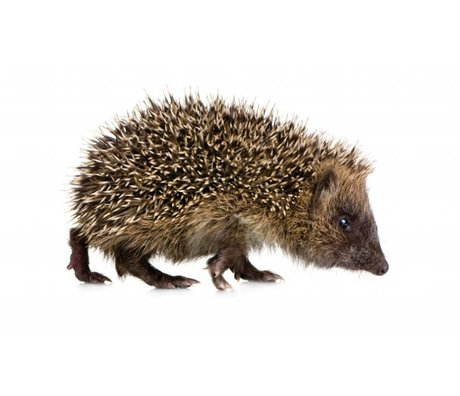 Kek Amsterdam Vægoverføringsbillede Hedgehog Forest Friend, brun, 17x10cm