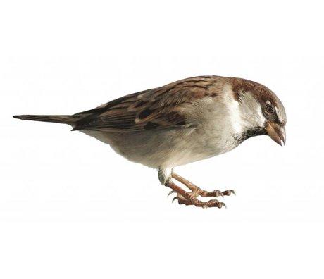 Kek Amsterdam Stickers muraux Sparrow Forêt ami, 15x7cm
