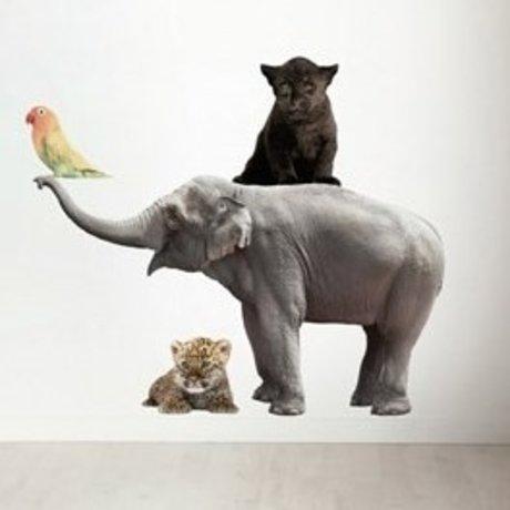Kek Amsterdam Tatuajes de pared en el Conjunto de 4 Elefante, pantera negro, pájaro, leopardo, div. Dimensiones