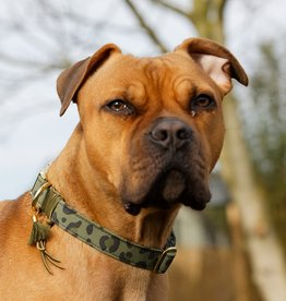 "Hundehalsband ""Paddy"""