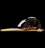 Hundedecke BUDDY.Büggel hellgrau - Reisedecke