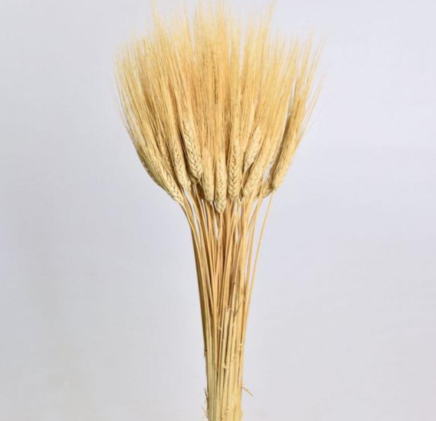 DF Wheat blond beard 75 cm