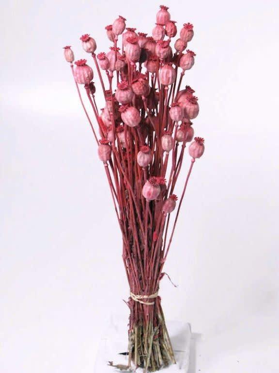 DF Papaver pink 65 cm