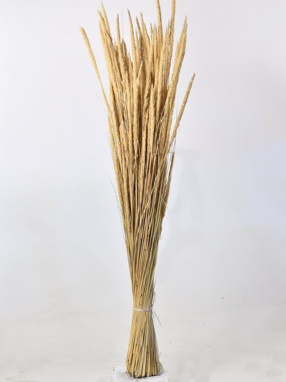 DF sand reed 110cm