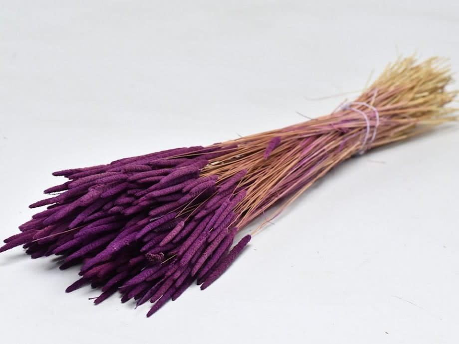 DF phleum purple