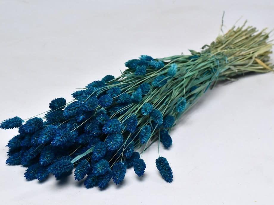 DF phalaris blue 70 cm