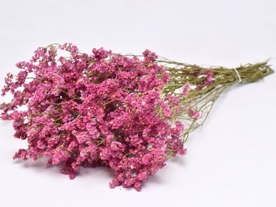 DF limonium dark pink 60 cm