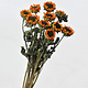 DF mini sunflower 3 pcs