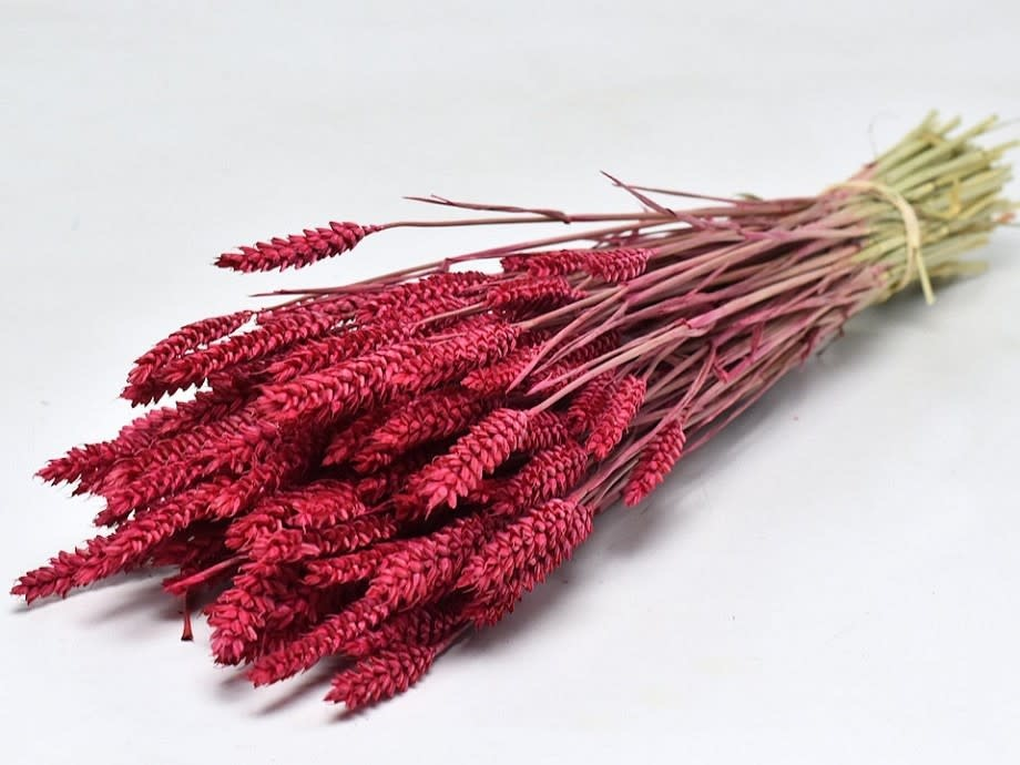 DF wheat cherry red 70 cm