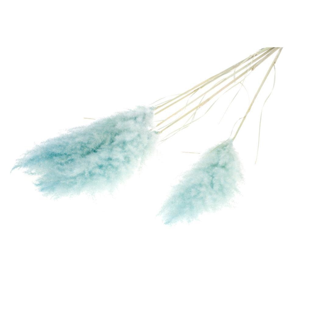 DF pampas ( cortaderia) blue misty per piece 115 cm