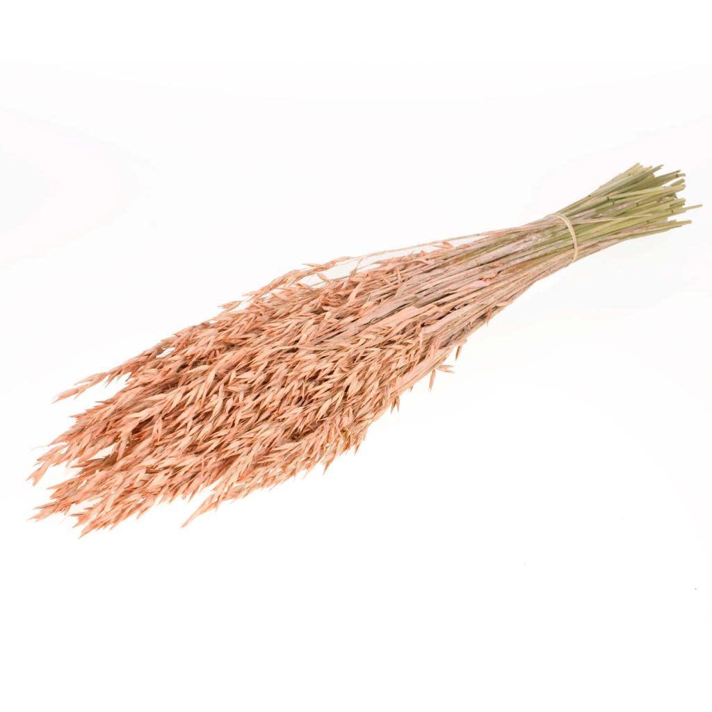 DF oats coral misty 70 cm