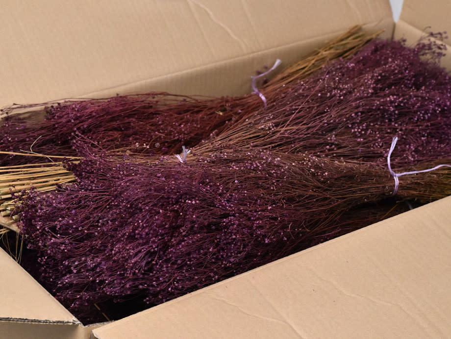 DF Broom Bloom purple 50 cm