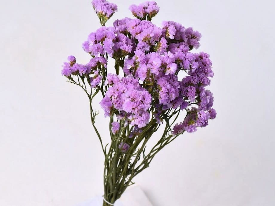 DF statice sinuata light lilac 45 cm