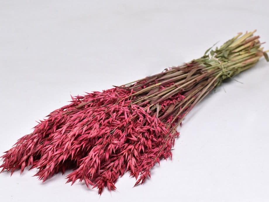 DF oats cherry red 70 cm