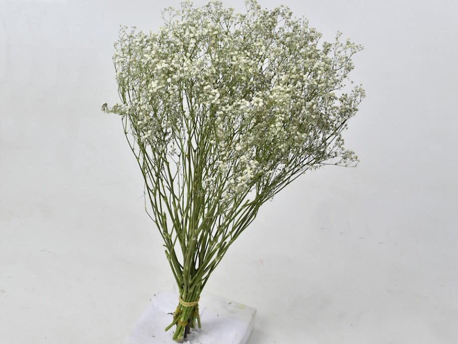 DF gypsophila white 70 cm