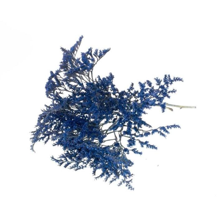 DF Statice tatarica 500gr SB dark blue