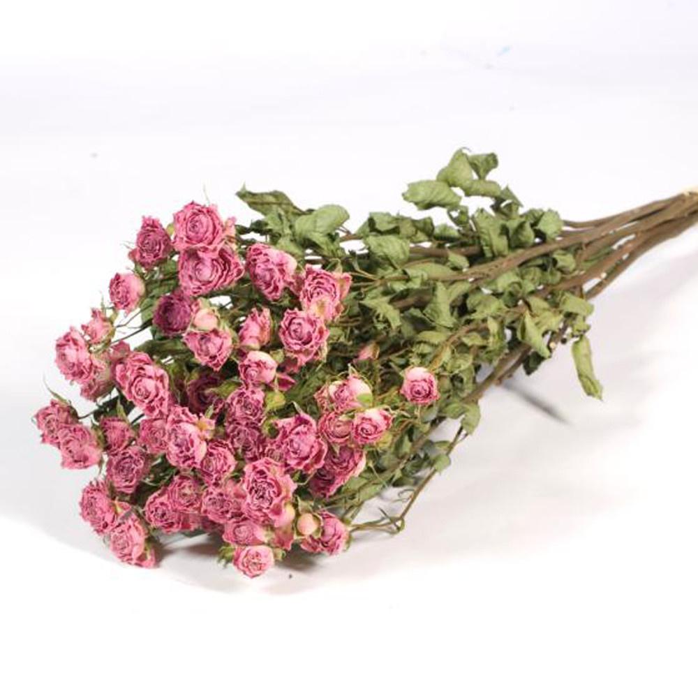 DF Roses spray light pink natural 60 cm