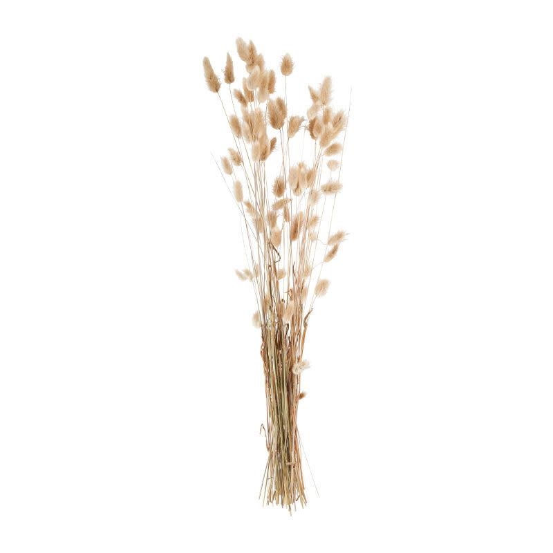 DF Lagarus naturel 70 cm
