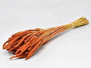 DF Phleum orange 70 cm