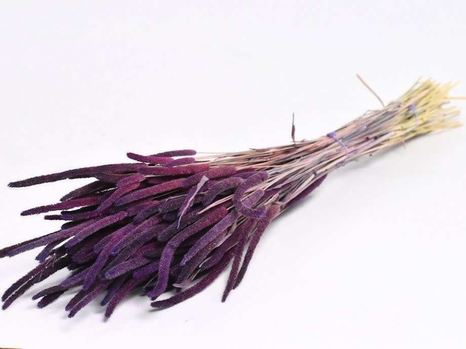 DF Phleum purple 70 cm