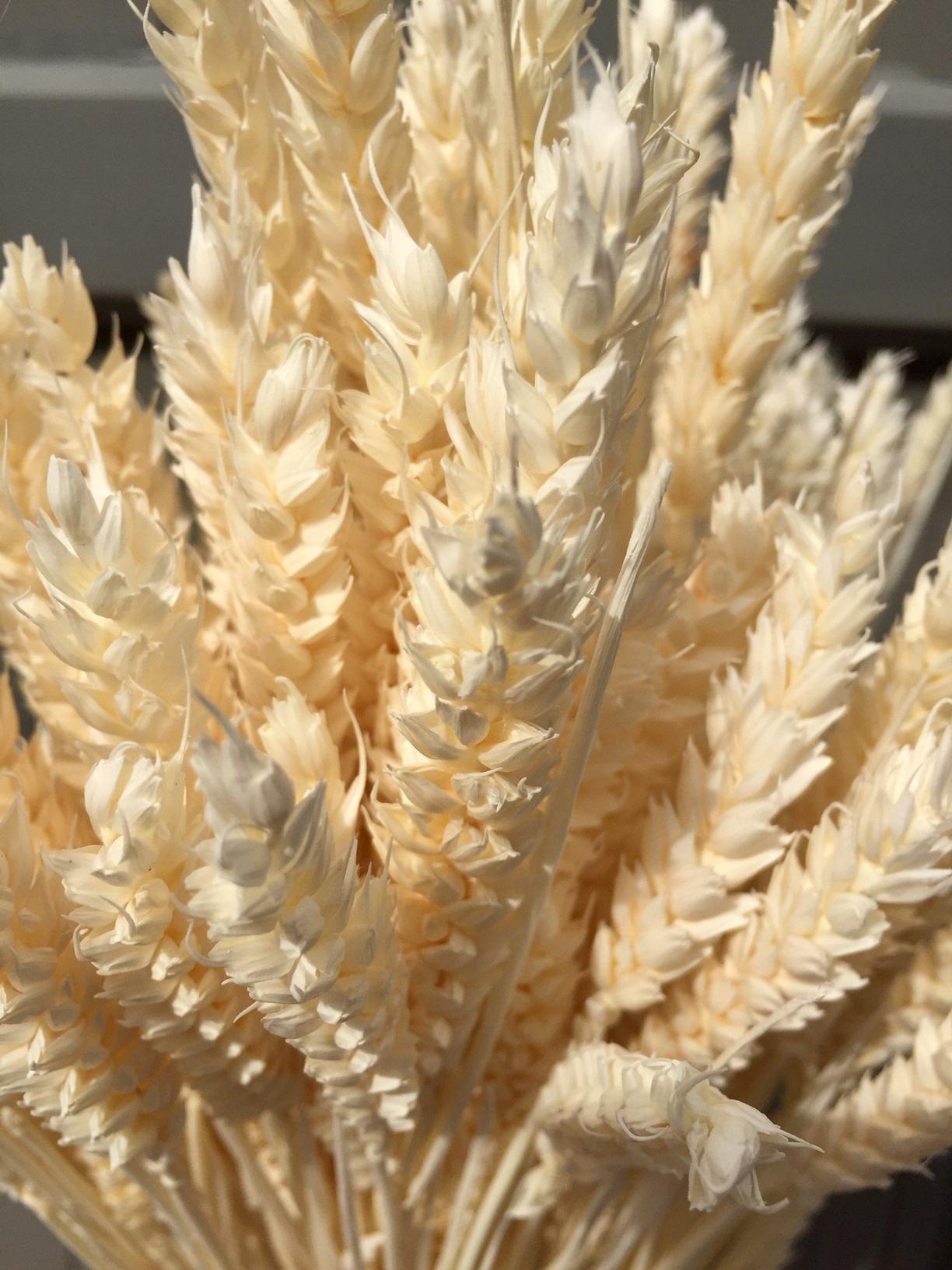 AA wheat bleached 70 cm