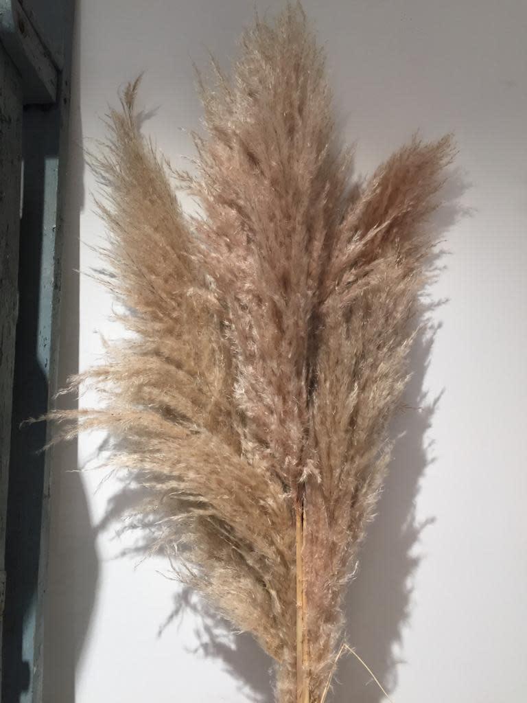 AA pampas fluf 170 cm