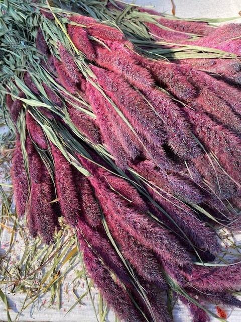 DF setaria purple 65 cm