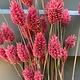 DF phalaris pink 70 cm