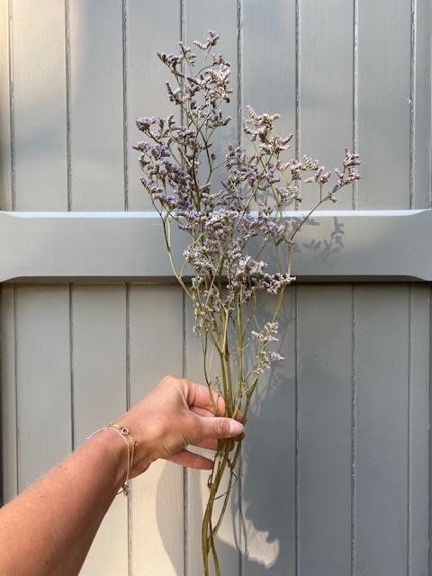 DF limonium violet 70 cm