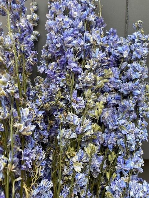 DF delphinium light blue 65 cm