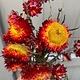 DF helichrysum red 45 cm