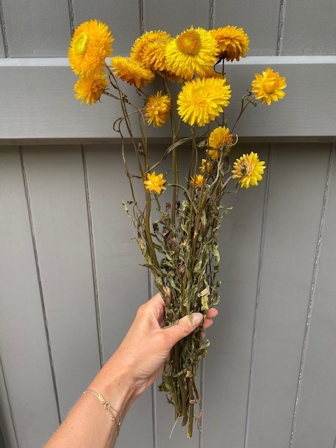 DF Helichrysum yellow 45 cm