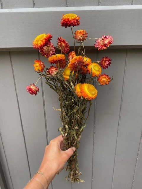 DF helichrysum orange 45 cm
