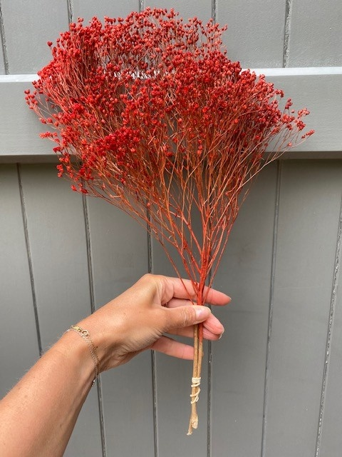 DF Broom Bloom red 50 cm
