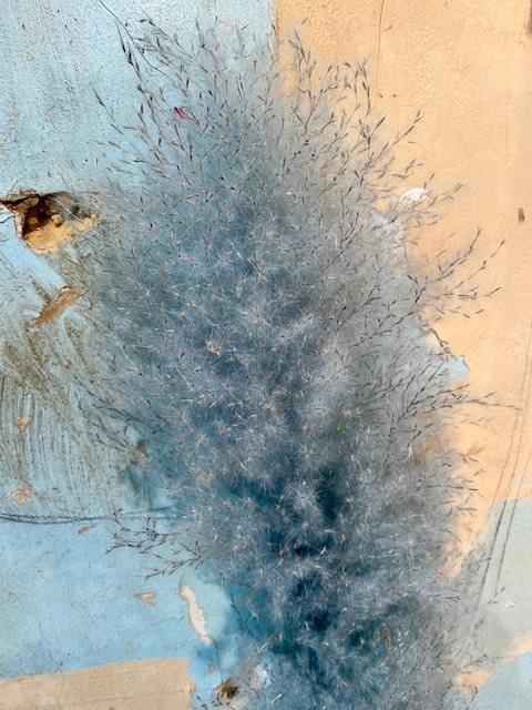 AA pampas ( cortaderia) blue misty per piece 115 cm
