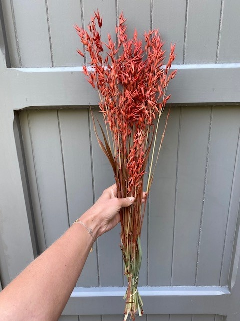 DF oats red 70 cm